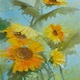 Glada solrosor/ Sunflowers
